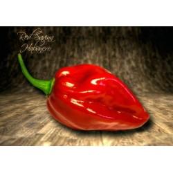 Habanero Savina Red Samen 2.45 - 4
