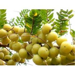 Semi Uva spina - Ribes Grossularia 1.55 - 4