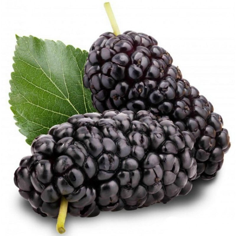 Black Mulberry Seeds (Morus nigra) 1.95 - 1