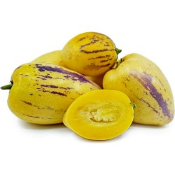 Semi di Pepino (Solanum muricatum) 2.55 - 6