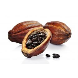 Cacao Tree Seeds (Theobroma cacao) 4 - 8