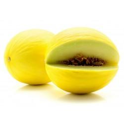 Sementes de Melão Amarelo Canaria 1.95 - 3