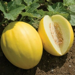 Canary Yellow Melon Seeds 1.95 - 2