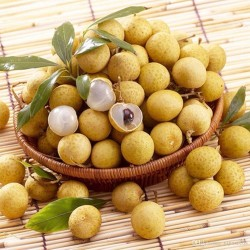Longan-Baum Samen Exotische Frucht 3.5 - 2