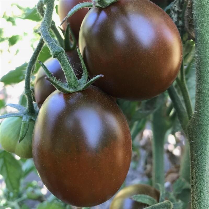 Graines de tomate PRUNE NOIRE - BLACK PLUM 2.85 - 4