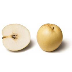 Azijska Kruska Seme (Pyrus pyrifolia) Chinese Sand Pear 3 - 3
