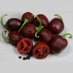 Sementes de Pimenta Rocoto Manzano Brown 2.5 - 1