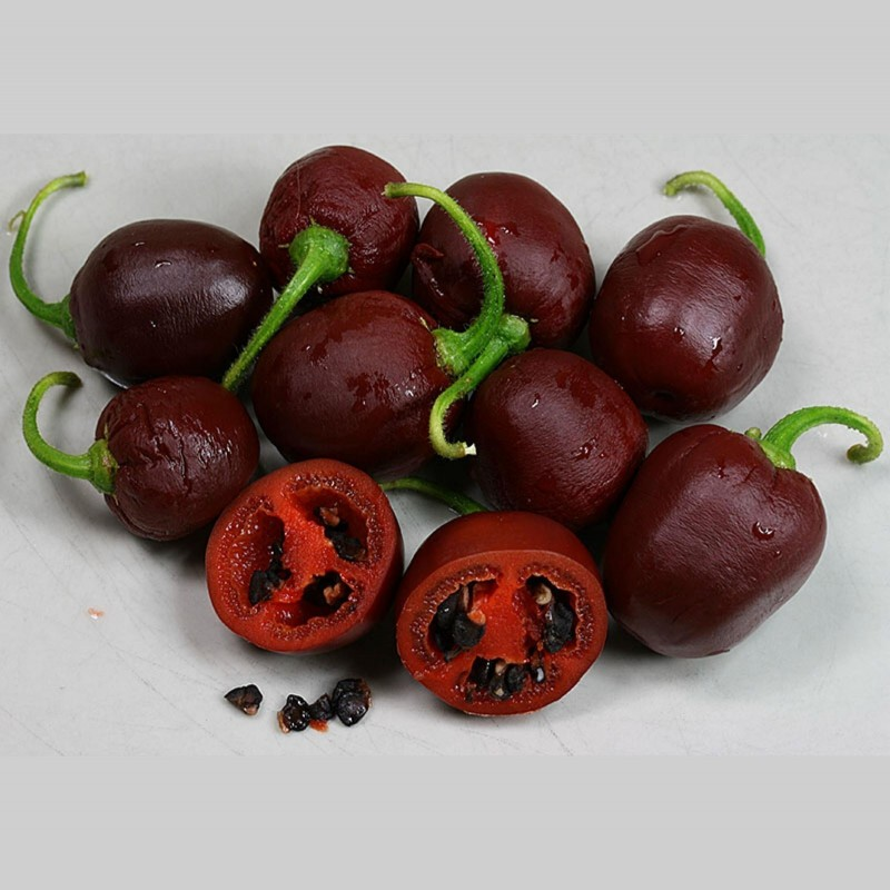Rocoto Manzano Brown Seeds 2.5 - 1