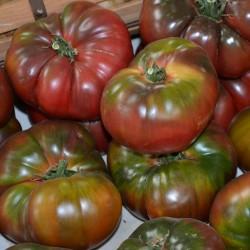 Black Krim Tomaten Samen 1.85 - 3