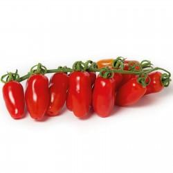 Graines de Tomate Mini San Marzano Jaune et rouge 1.95 - 3