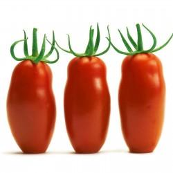 Graines de Tomate Mini San Marzano Jaune et rouge 1.95 - 6