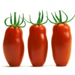 Mini San Marzano Yellow and Red Tomato Seeds 1.95 - 6