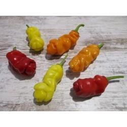 Penis Chili Seeds 3 - 5