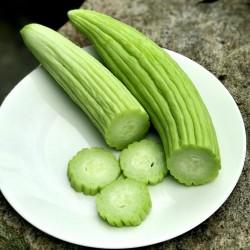 Armenian Yard Long Cucumber Seeds 1.95 - 5