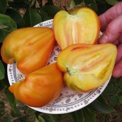 Semi Bio Di Pomodoro Orange Russian 1.8 - 3