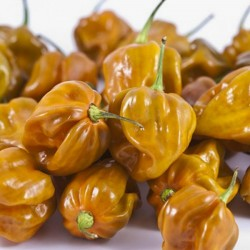 Habanero Mustard Dark Orange Seeds 1.85 - 1