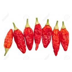 Tabasco Chili - Cili Seme 2.15 - 4