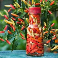 Sementes De Pimenta Tabasco 2.15 - 1