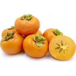 American persimmon seeds (Diospyros virginiana)