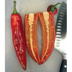 Sementes de Chile - Pimenta ANAHEIM (Capsicum Annuum) 1.75 - 4