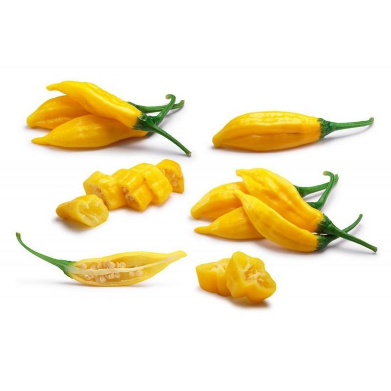 Semi Di Peperoncino Lemon Drop (Capsicum baccatum) 1.5 - 1