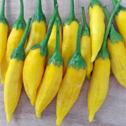 Lemon Drop Chili Seeds (Capsicum baccatum) 1.5 - 2