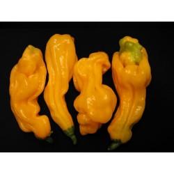 Habanero  Goronong Seeds 2.5 - 1
