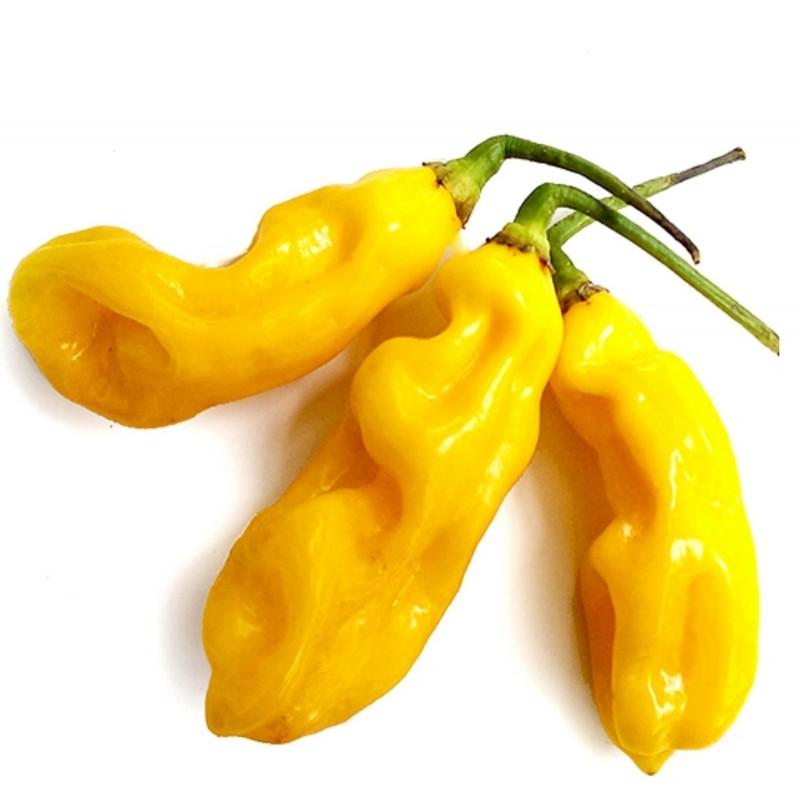 Sementes Da Pimenta - Goronong 2.5 - 4