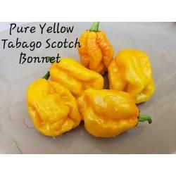 Semi di Peperoncino Scotch Bonnet Yellow 2 - 1