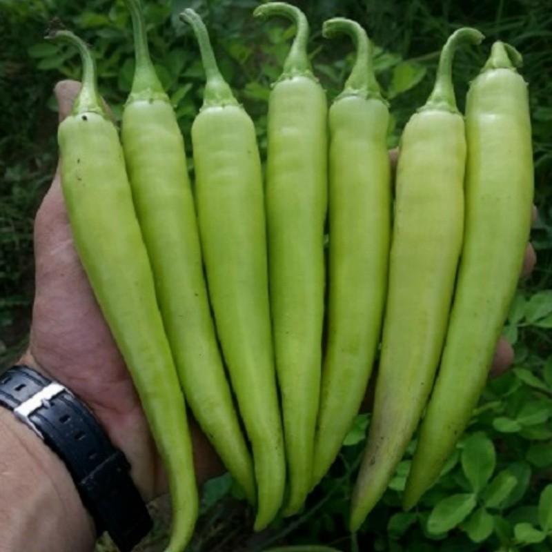 Σπόροι καυτερή πιπεριά NISKA SIPKA της Σερβίας Ποικιλία 2.25 - 3