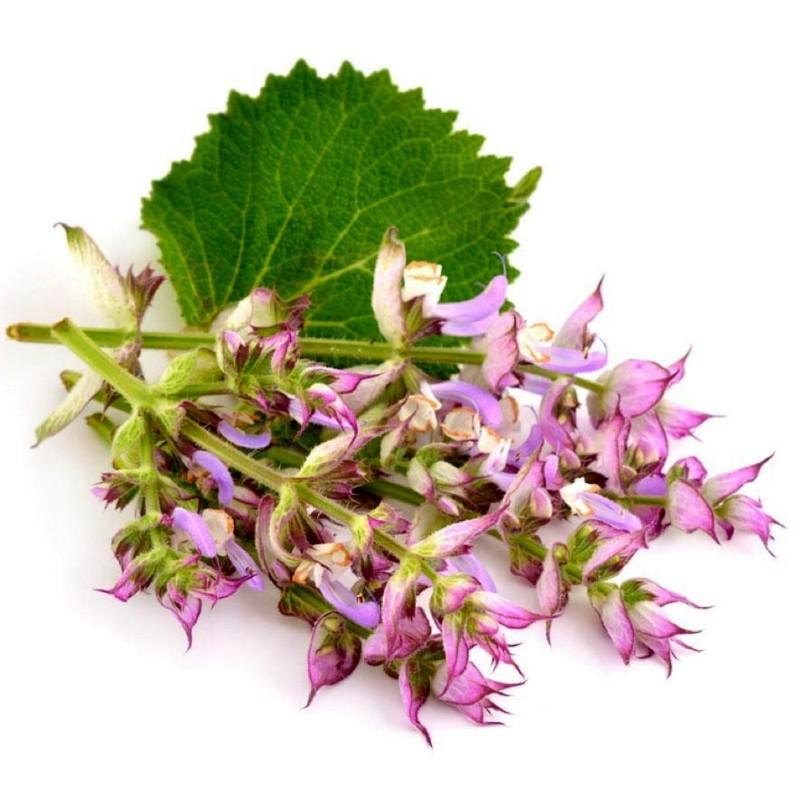 Clary Sage Seeds Medicinal Plant (Salvia sclarea) 1.25 - 1