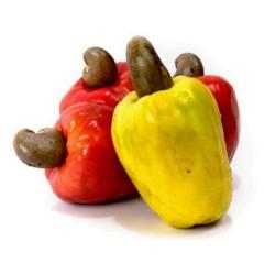 Cashew Nut Seeds Cashew Apple (Anacardium occidentale)