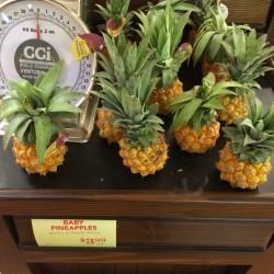 Baby Ananas - Mini Ananas Seme Egzoticno Voce 3 - 3