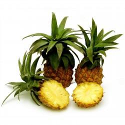 Baby Ananas - Mini Ananas Samen Exotische Pflanze 3 - 4