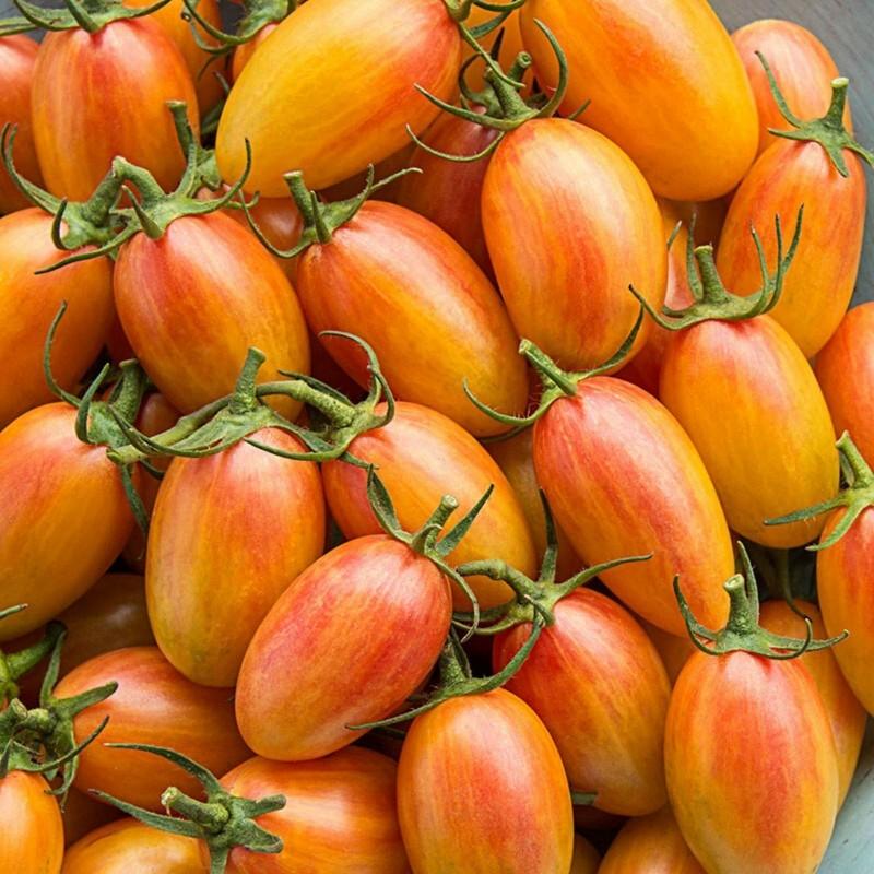 Ντομάτα σπόρος ARTISAN BLUSH TIGER 2.5 - 5