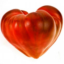 """Sementes de Tomato """"Coração de Boi"""" 1.75 - 1"""