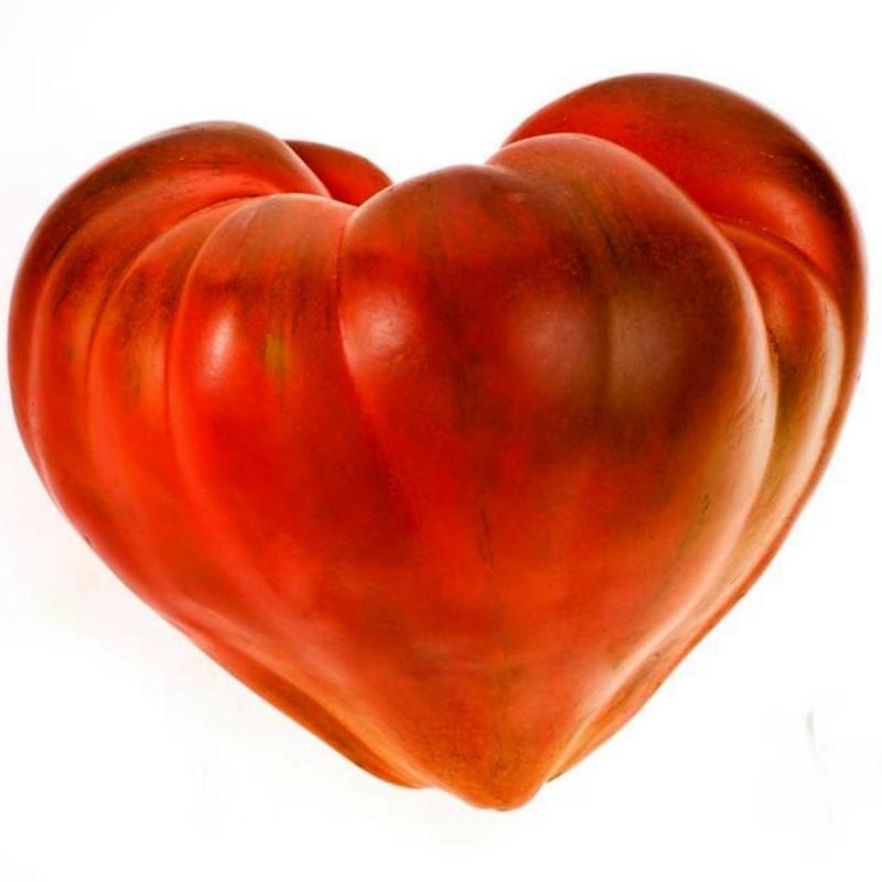 Paradajz Seme Volovsko Srce 1.75 - 1