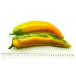 Sementes Pimenta Doce MARCONI DOURADO 1.65 - 1