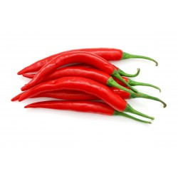 Hot Chilli Pepper RING OF FIRE Seeds 1.7 - 1