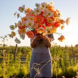 Sementes De Flor Papaver Shirley Poppy 2.05 - 4