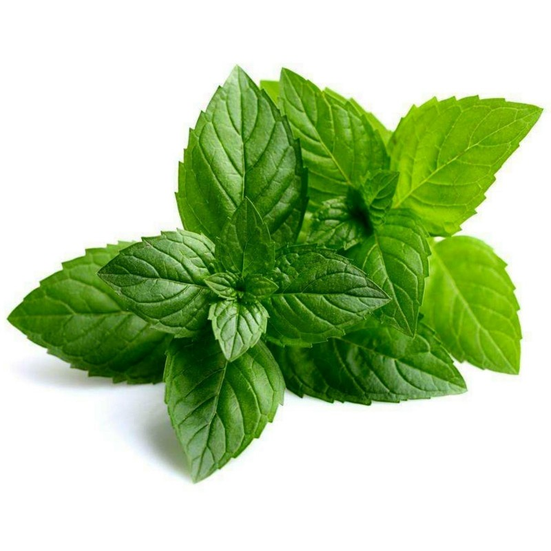 Peppermint Seeds (Mentha  piperita) 2.5 - 4