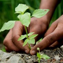 Seeds Gallery Guida alla piantagione di profondità 0 - 2
