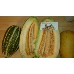 Sweet Thai Musk Melon Seeds
