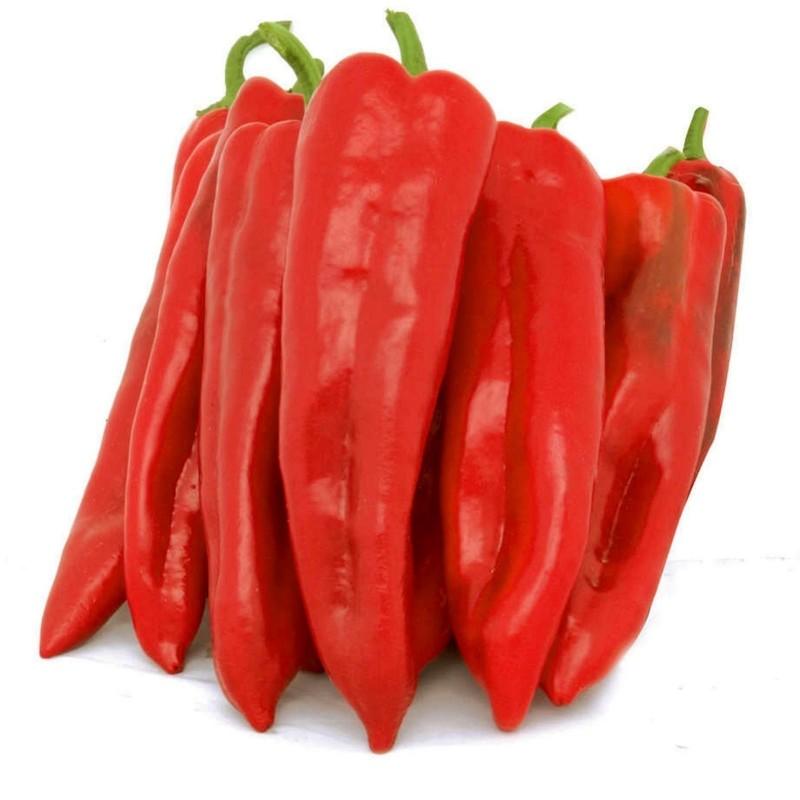 CORNO DI TORO ROSSO Paprika Samen 2 - 3