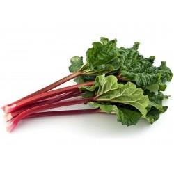 "Rhubarb Seeds ""Victoria"" (Rheum rhabarbarum) 1.85 - 4"