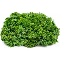 Sementes de Salsa (planta) ''Mooskrause 2'' 1.55 - 4