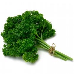 Sementes de Salsa (planta) ''Mooskrause 2'' 1.55 - 2