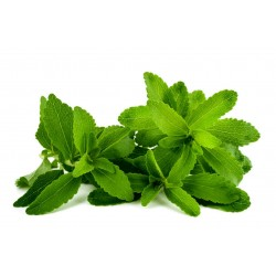 Stevia Στέβια σπόρων φαρμακευτικού φυτού 1.9 - 2