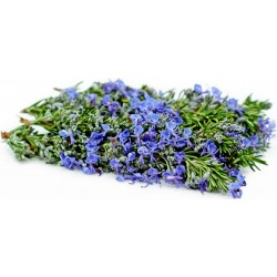 Rosemary Seeds (Rosmarinus officinalis) 2.5 - 4