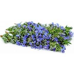 Sementes de Alecrim aromático 2.5 - 4